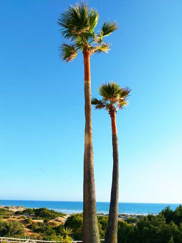 Zimmer mit Meerblick im Urlaub an der Costa de la Luz