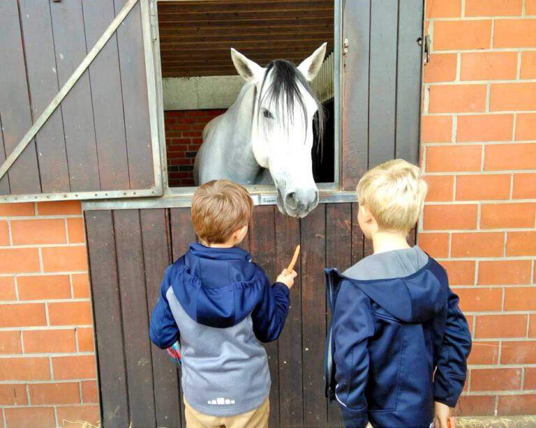 Pferde sind für alle da